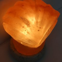 Crafted Himalayan Shell Salt Lamp | Himalayan Salt Factory