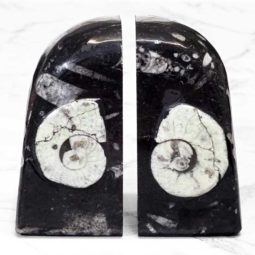 Ancient Fossil Orthoceras Bookends - Ammonite Round Shaped | Himalayan Salt Factory