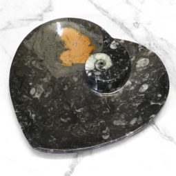 Ancient Fossil Orthoceras Heart Plate | Himalayan Salt Factory