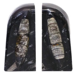 Ancient Fossil Orthoceras Bookends - Round Shaped | Himalayan Salt Factory